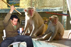 tres_simios.jpg