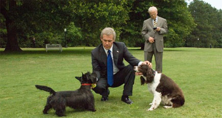 w-bush-dogs