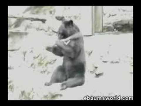 El oso ninja