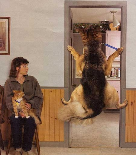 Perros en el veterinario