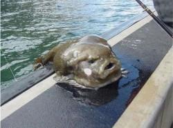 Una de peces